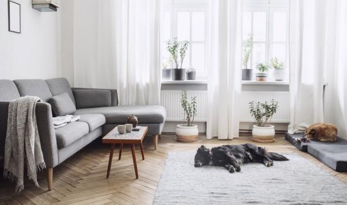 Grey Sofa With Dog (1)