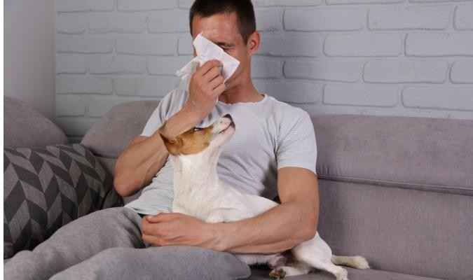 Man With Dog Sneezing From Allergies On A Couch